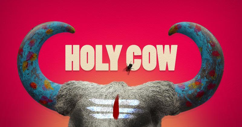 primo piano della fronte di una vacca indiana con grandi corna colorate