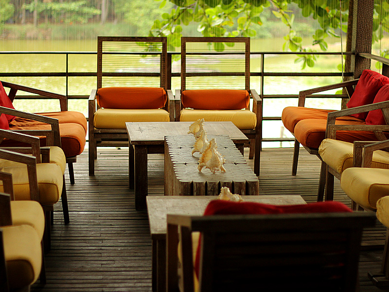 La prelibata esca del mar arabico - Palme con il cui legno si fanno sedie e tavoli ...