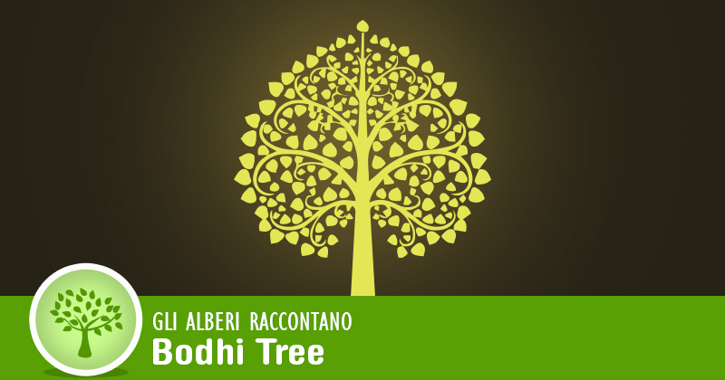 Gli alberi raccontano: bodhi tree