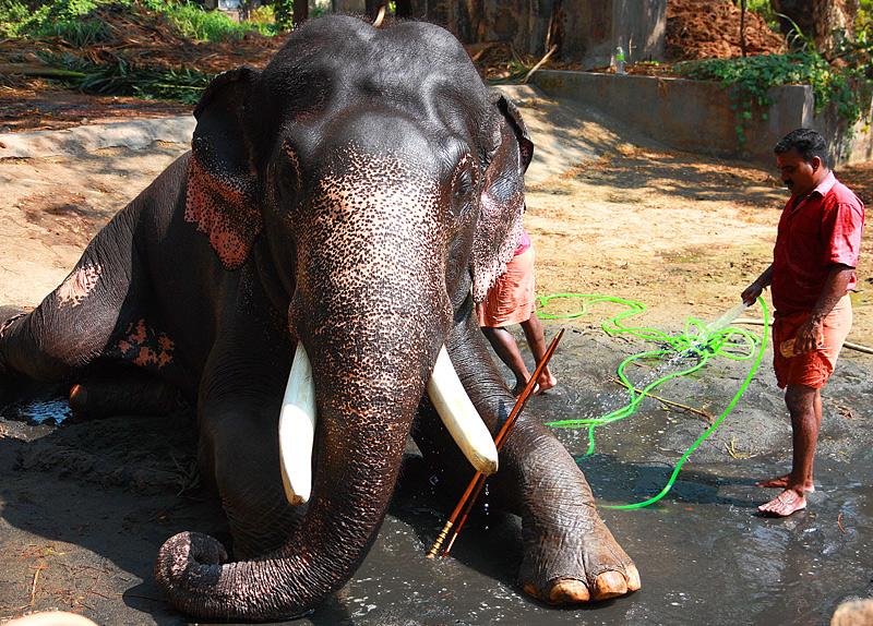 Elephant's Shower
