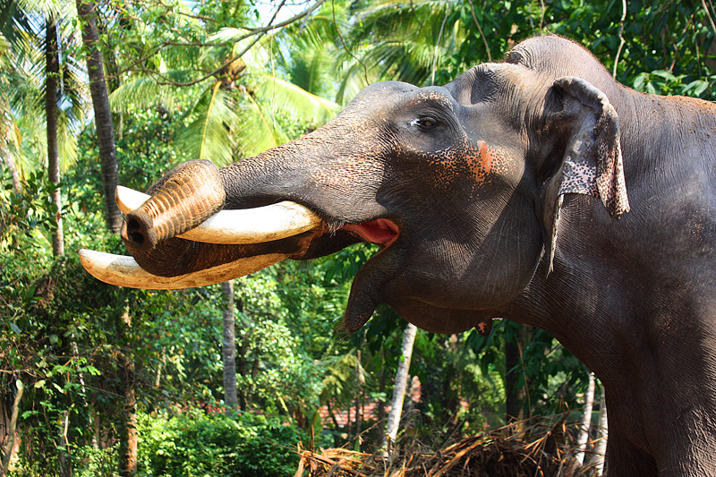 Stretching exercise for elephants