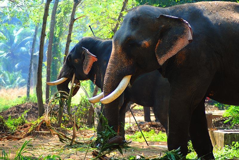 Elephants' side